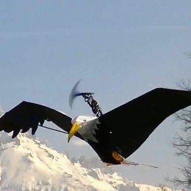 Remote Control Eagle