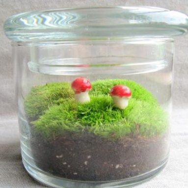 Large Moss Terrarium