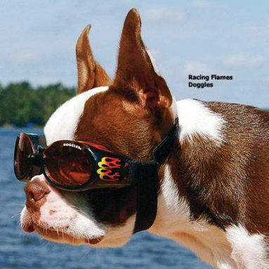 Eyewear for dogs