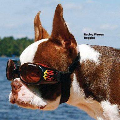 Eyewear for dogs