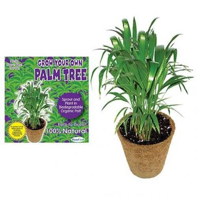 Grow your own palm tree in a biodegradable organic pot