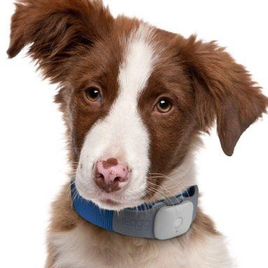 The Pet Tracker Master Kit