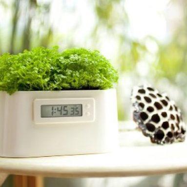 Plant Powered Clock