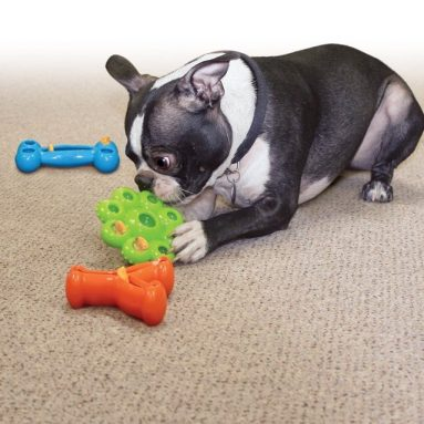 Quest Star Pods Treat Dispensing Dog Toy